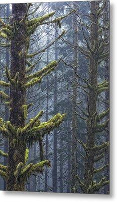 Misty Mystical Moss Forest Metal Print by Paul W Sharpe Aka Wizard of Wonders