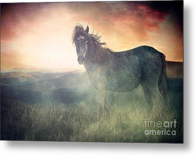 Misty Sunset Metal Print by Lee-Anne Rafferty-Evans