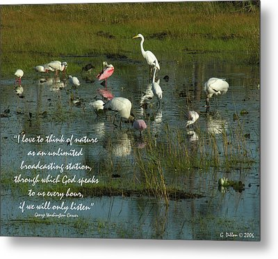 Mixed Flock In Oasis Metal Print by Grace Dillon