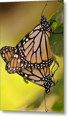 Monarch Bliss Metal Print by Marty Koch