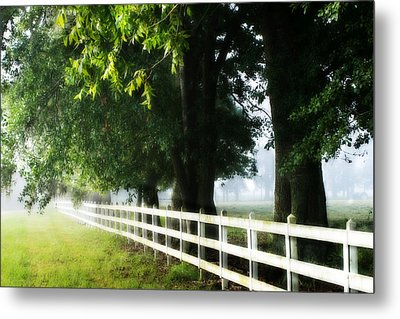 Morning Light Metal Print by Mary Hershberger