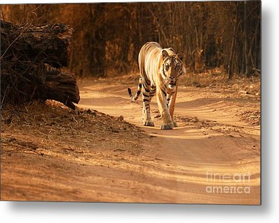 Metal Print featuring the photograph Morning Stroll by Fotosas Photography