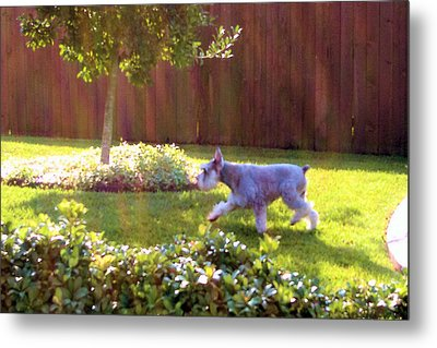 Morning Walk Metal Print by Diane Ferguson
