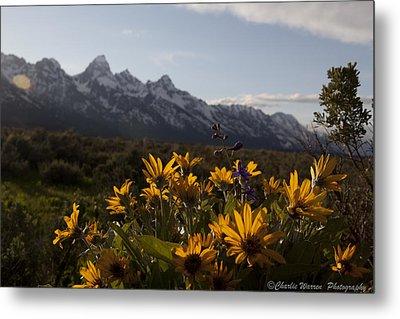 Mountain Flowers Metal Print by Charles Warren