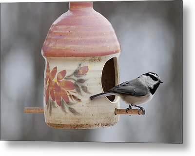 Mountian Chickadee At Feeder Metal Print