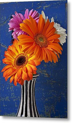 Mums In Striped Vase Metal Print by Garry Gay