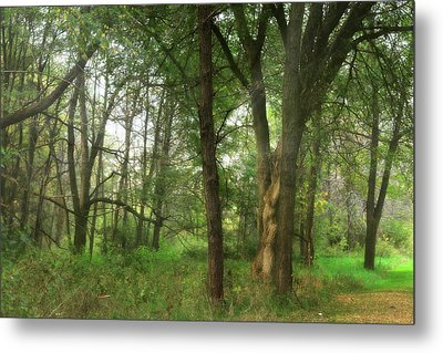Mystic Forest Metal Print by Scott Hovind