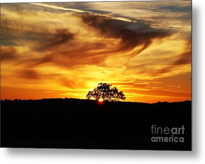Metal Print featuring the photograph Nature's Last Sigh Goodnight by Julie Clements