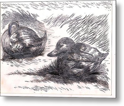 Nesting Mallards Metal Print by Al Goldfarb