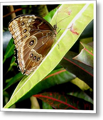 Metal Print featuring the photograph No Nectar Here by Frank Wickham