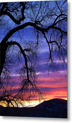 Metal Print featuring the photograph Obeisance by Jim Garrison