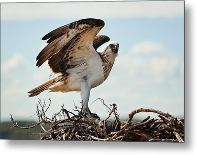 On Guard Metal Print by Heather Thorning