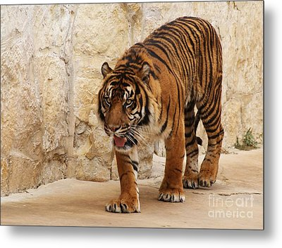 Metal Print featuring the photograph On The Lookout by Julie Clements