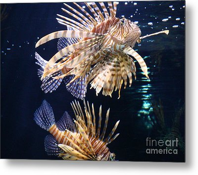 Metal Print featuring the photograph On The Prowl by Vonda Lawson-Rosa