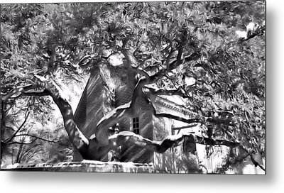 Metal Print featuring the photograph One Cool Old Tree by Katie Wing Vigil