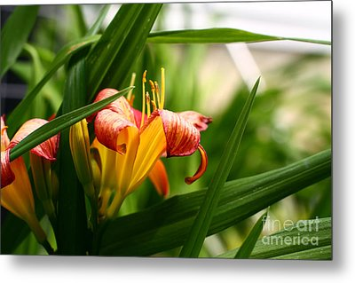 Metal Print featuring the photograph Orange Lily by Denise Pohl