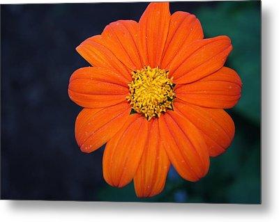 Orange Perfection Metal Print by Devon Stewart