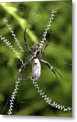 Metal Print featuring the photograph Orb Weaver by Joy Watson