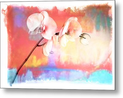 Orchid 3 Metal Print by Mauro Celotti