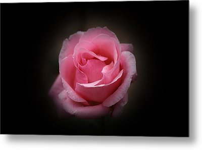 Metal Print featuring the photograph Original Rose Petals by Anthony Rego