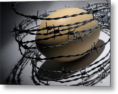 Ostrich Egg Surrounded By Barbed Wire Metal Print by Sami Sarkis