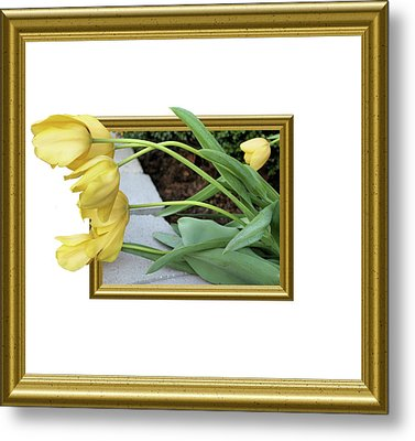 Out Of Frame Yellow Tulips Metal Print