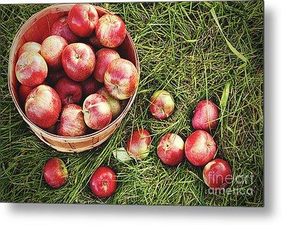 Overhead Shot Of A Basket Of Freshly Picked Apples Metal Print by Sandra Cunningham