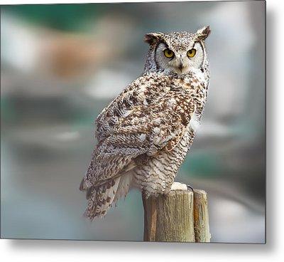 Owl Love Metal Print by Naman Imagery