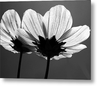 Pair Of Cosmia Flower Metal Print