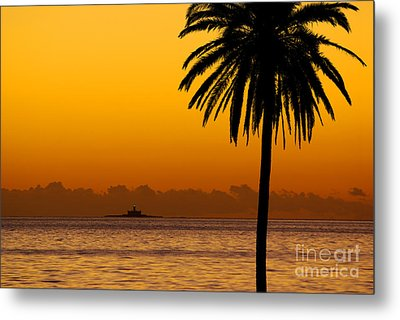 Palm Tree Sunset Metal Print by Carlos Caetano
