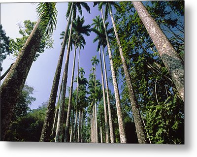 Palm Trees Against The Sky Metal Print by George Oze