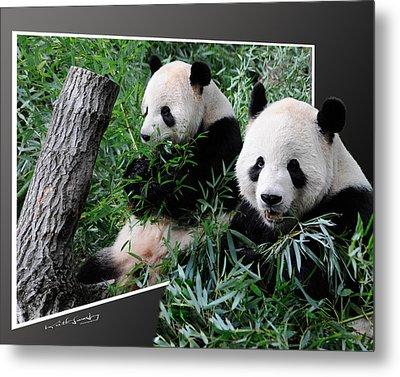 Panda Out Of Frame Metal Print