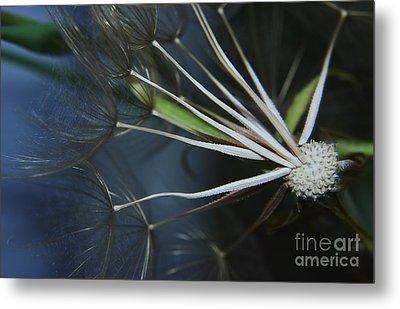 Parachute Seeds  Metal Print by Jeff Swan