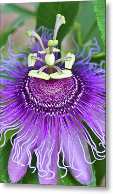 Metal Print featuring the photograph Passion Flower by Albert Seger