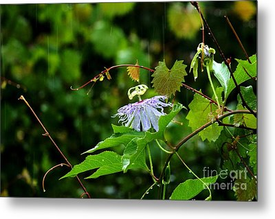 Passion Flower In The Rain Metal Print by Theresa Willingham