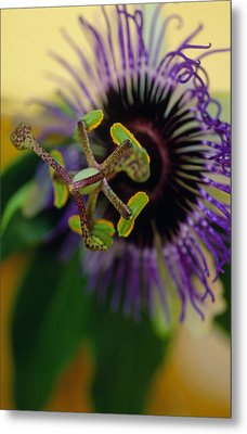 Passionate Flower Metal Print by Kathy Yates