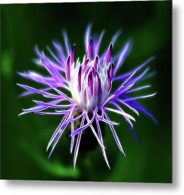 Passionately Purple Metal Print by Bill Morgenstern
