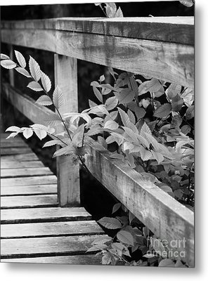 Metal Print featuring the photograph Path Interrupted by Julie Clements