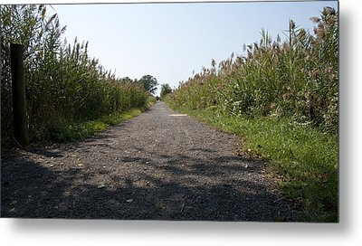 Path To The Bay Metal Print by Charles Kraus