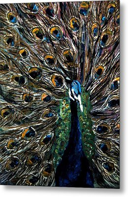 Peacock 2 Metal Print by Amanda Dinan