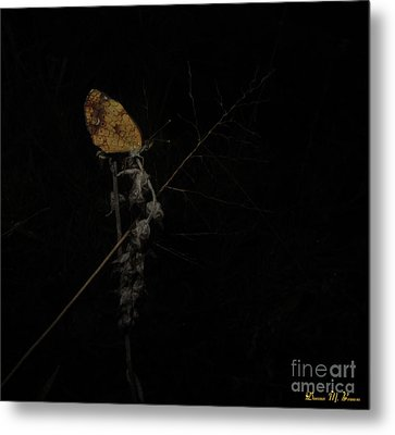 Pearly Crescentspot Butterfly Metal Print by Donna Brown
