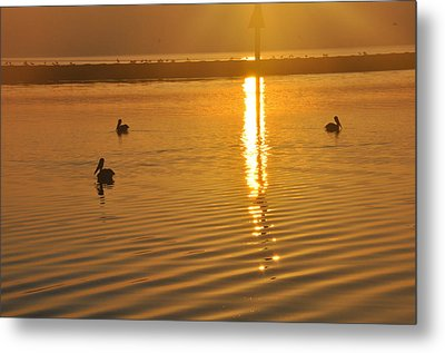 Pelicans And Sunrise Metal Print