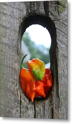Peppered Fence Metal Print by Lauri Novak