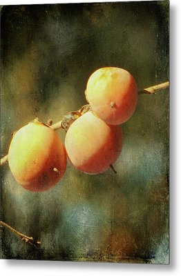 Persimmons Metal Print by Amy Tyler
