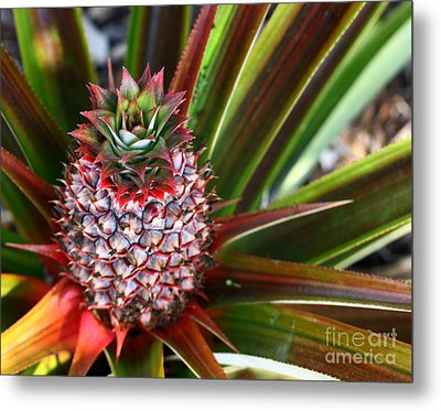 Metal Print featuring the photograph Pineapple by Denise Pohl