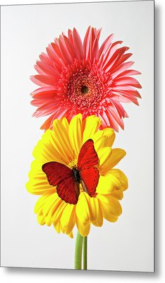 Pink And Yellow Mums Metal Print by Garry Gay