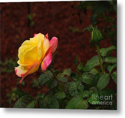 Pink And Yellow Rose 6 Metal Print