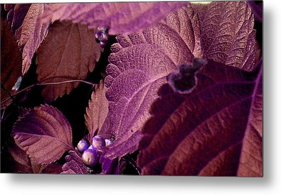 Pink Leaves Metal Print by Juliana  Blessington