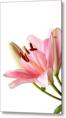 Pink Lilies 06 Metal Print by Nailia Schwarz