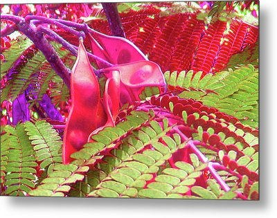 Pink Mimosa Metal Print by Juliana  Blessington